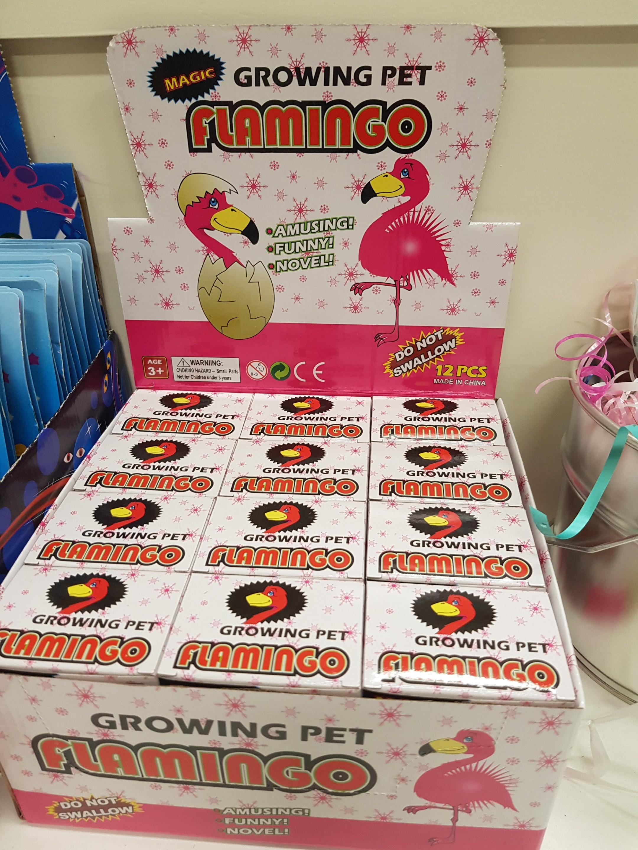 Groeiende flamingo in ei